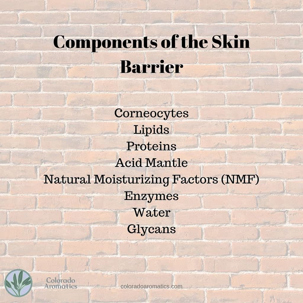 Components of the Skin Barrier