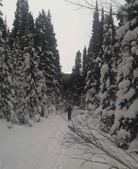 cross country skiing outdoors