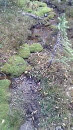 Stream at Milner Pass