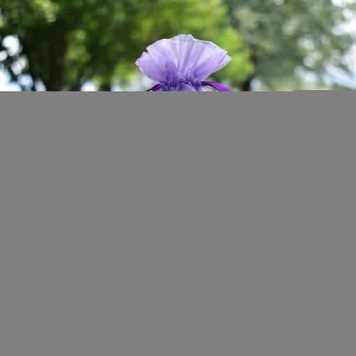 lavender lovers set